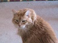 Catsapril06a001