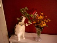 Parkflowers