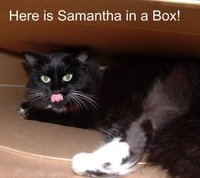 Samanthasbox